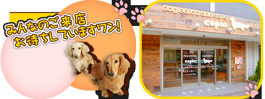 三郷中央駅 徒歩3分|ドッグサロンandカフェCopin|Dogsalon&Cafe COPIN